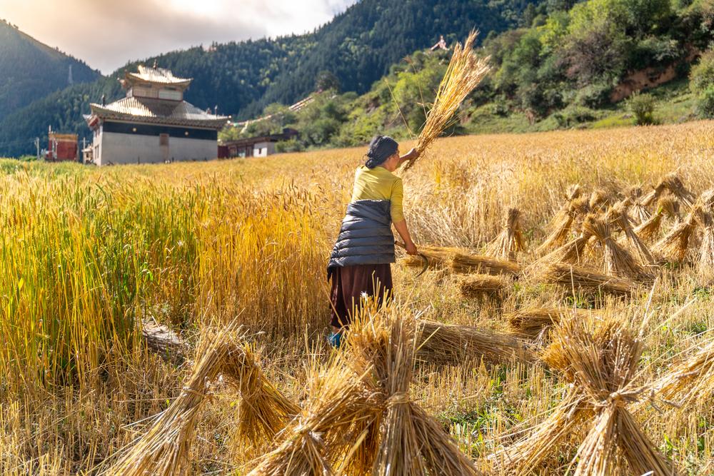 butan, organik, ülke, yiyecek, beslenme, tarım