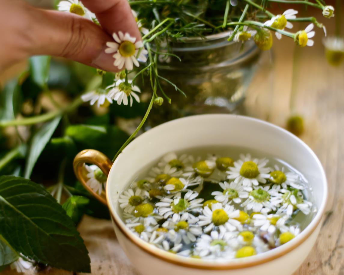 Baş Ağrısında Tedavi Niteliğinde Kullanılan Bitkisel Çaylar