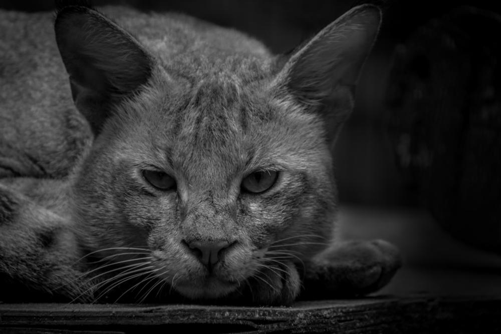 Kedi Bakımında En Sık Yapılan 5 Hata