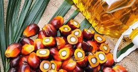 Hakkında Çok Konuşulan Palm Yağı ile İlgili Bilmeniz Gerekenler