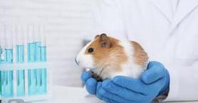 Hayvan Deneyleri Yapılmayan Kozmetik Ürünleri