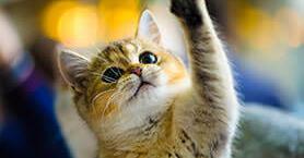 Kediler Ne Söyler, İnsanlar Ne Anlar?