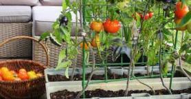 Balkonunda Organik Tarım Yapmak İsteyenlere Öneriler