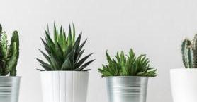 Bitkiler Dünyasında Sizi Şaşırtacak Bilgiler
