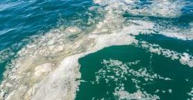 Marmara Denizi'ndeki Müsilaj Nedir?