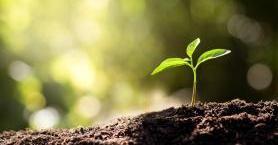 Organik Yaşam Tarzı ile Çevreni Koruman Mümkün