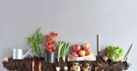 Organik Gıdalar Hakkında Doğru Bilinen Yanlışlar