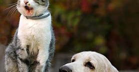 Kedi ve Köpek Sahiplerinin Yaptığı 10 Hata