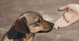 Sokak Hayvanlarını Beslerken Dikkat Etmeniz Gereken 6 Şey
