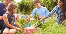 Ailecek Vakit Geçirmenin En Güzel Yolu: Hobi Bahçeciliği