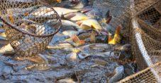 Hangi Balık Ne Zaman Yenmeli?